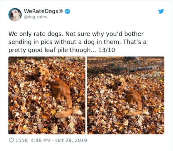 WeRateDogs Tweets