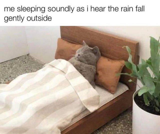 Wholesome Memes, part 7