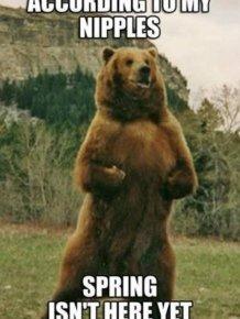 Spring Memes