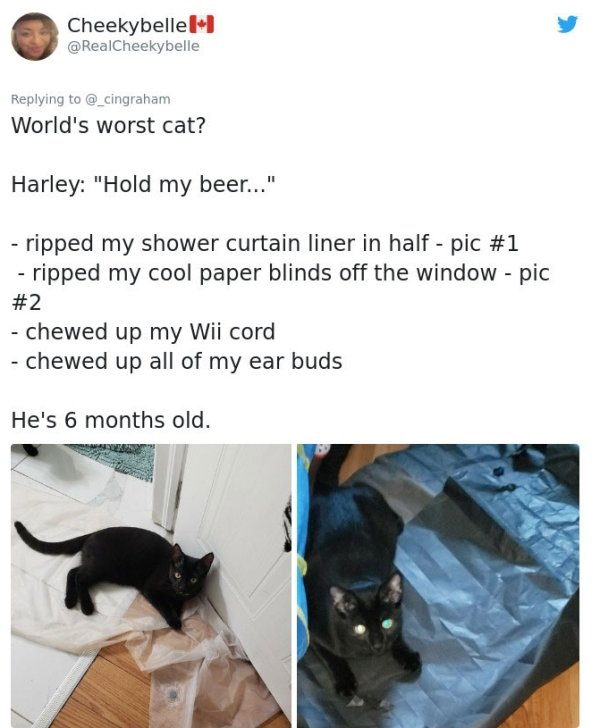 Cats' Stories