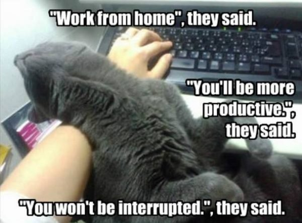 Work From Home Memes