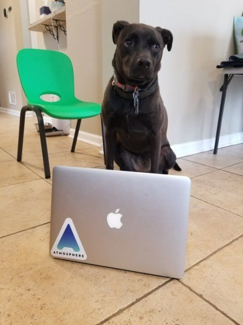 When Pets Help You To Work From Home