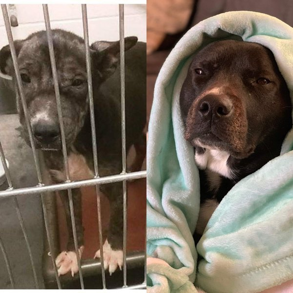 Pets Before And After Adoption, part 2