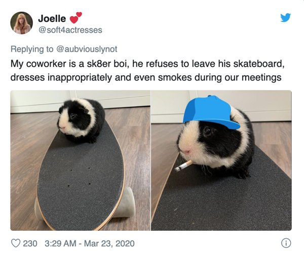 Fluffy Coworkers