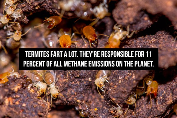 Fart Facts