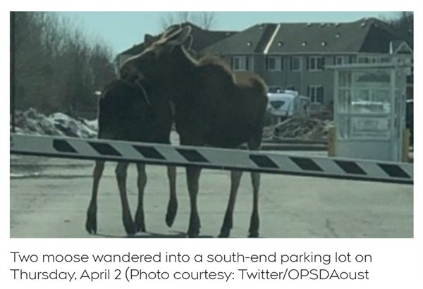 Only In Canada, part 16