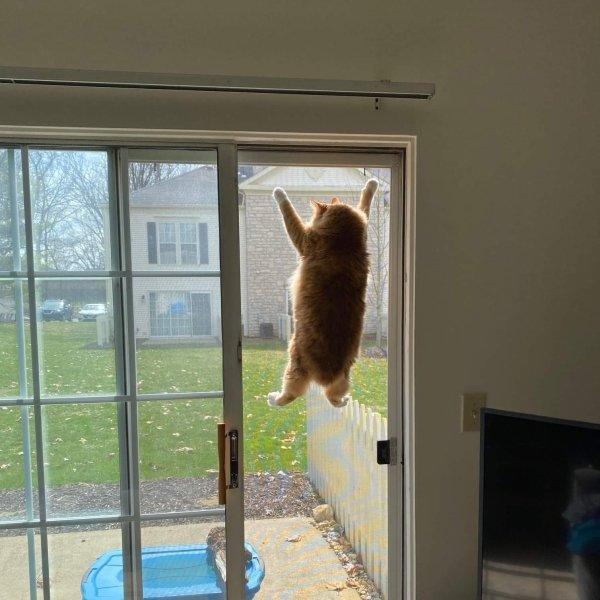 Hilarious Cats, part 2