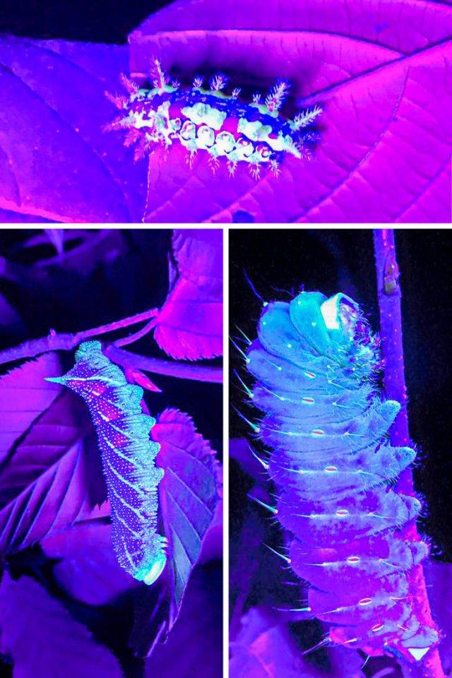 Everything Changes Under Ultraviolet Light