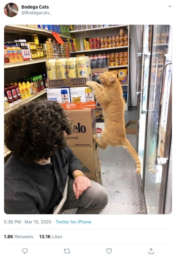Convenience Store Cats