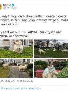 Quarantine And The British Sense Of Humor