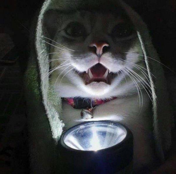 Hilarious Cats, part 3
