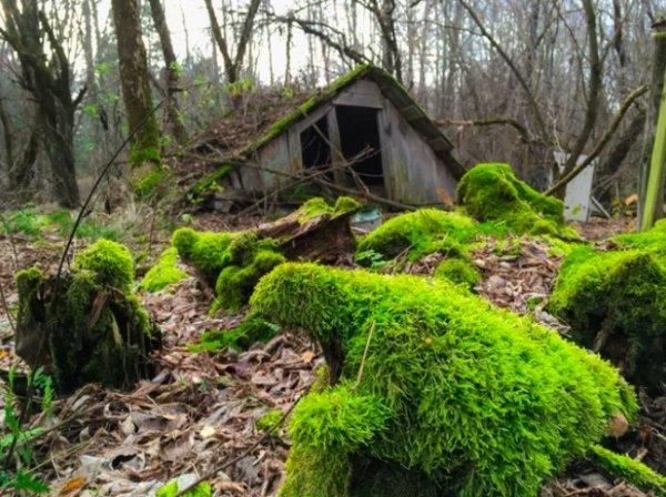 When Nature Won The Battle Against Civilization