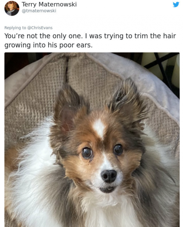 Dog Quarantine Haircuts Made By Their Owners