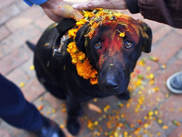 Festival Dogs