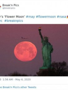 Beautiful May's Flower Moon