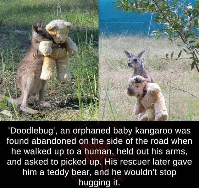 Wholesome Stories, part 6