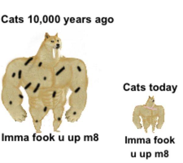 Random Funny Memes, part 53