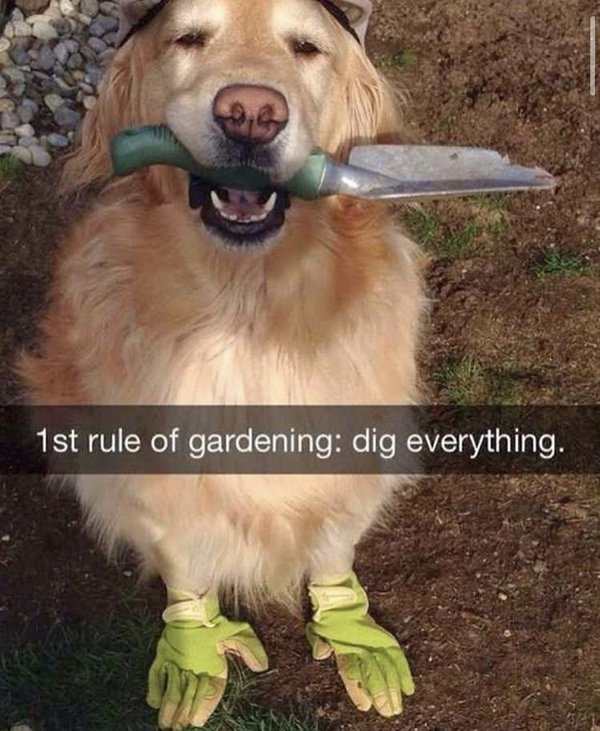 Dogs And Their Jobs