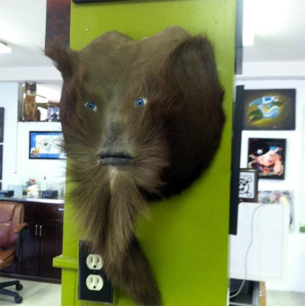 What Taxidermists Do With Deer Butts