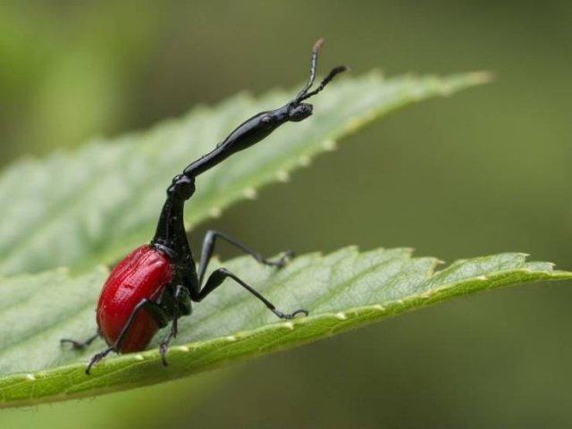 Amazing Nature, part 3