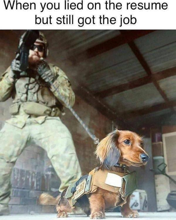 Random Funny Memes, part 64