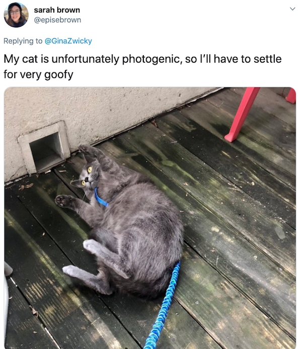 Animals: Taking Pictures Fails