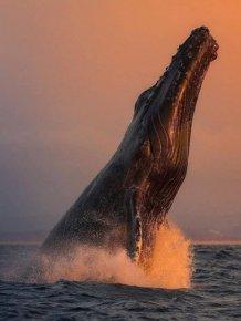 Ocean's Beauty
