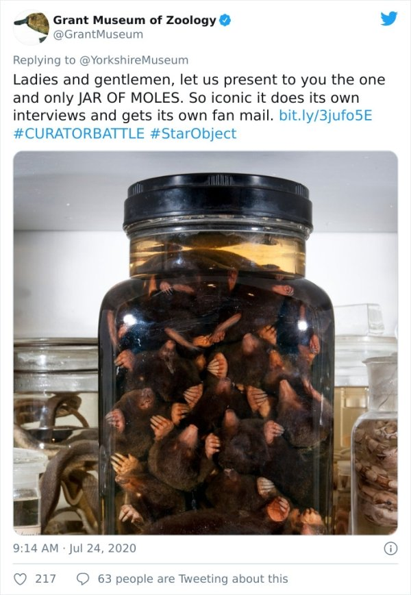 Museum Curator Battle