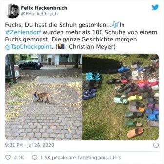 When Fox Became A Shoe Thief
