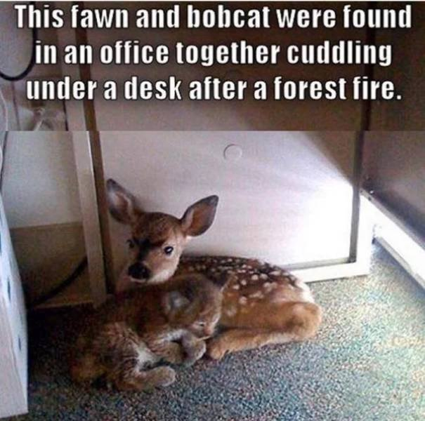 Wholesome Stories, part 18