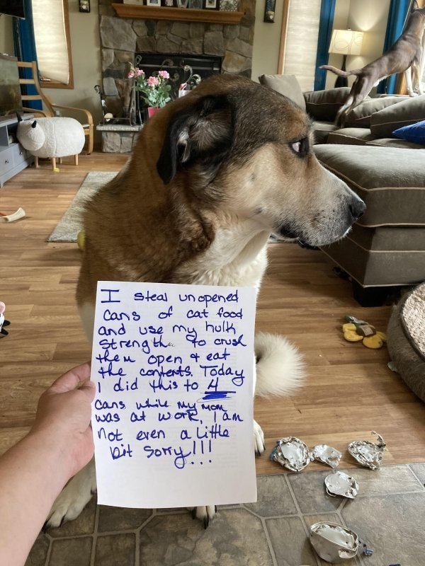Pet Shaming, part 2