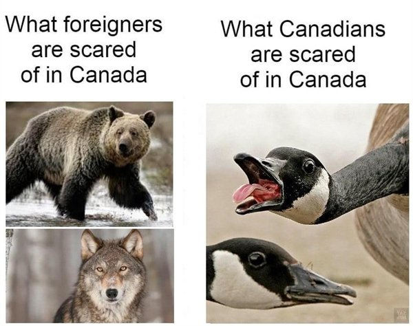 Only In Canada, part 25