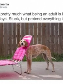 Truth About Being An Adult