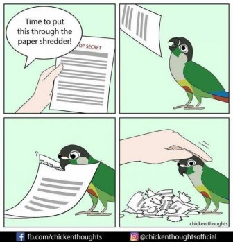 Funny Comics About Birds