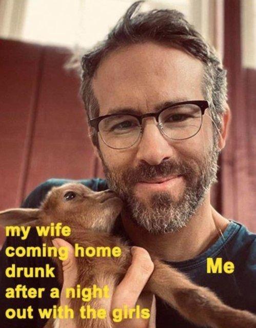 Ryan Reynolds Memes, part 2