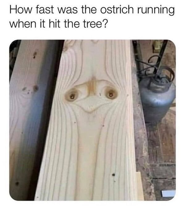 Random Funny Memes, part 84