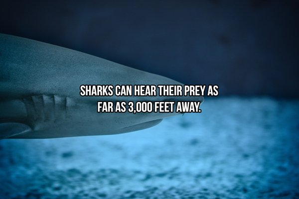 Shark Facts