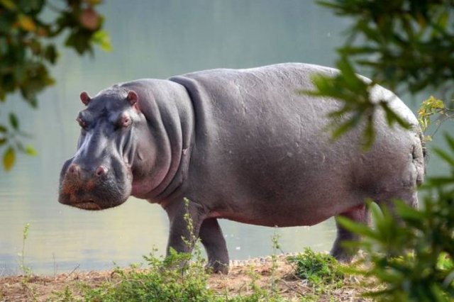 These Animal Species Exist Much Longer Than You've Expected