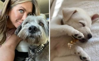 Celebrities Who Adopted Their Pets