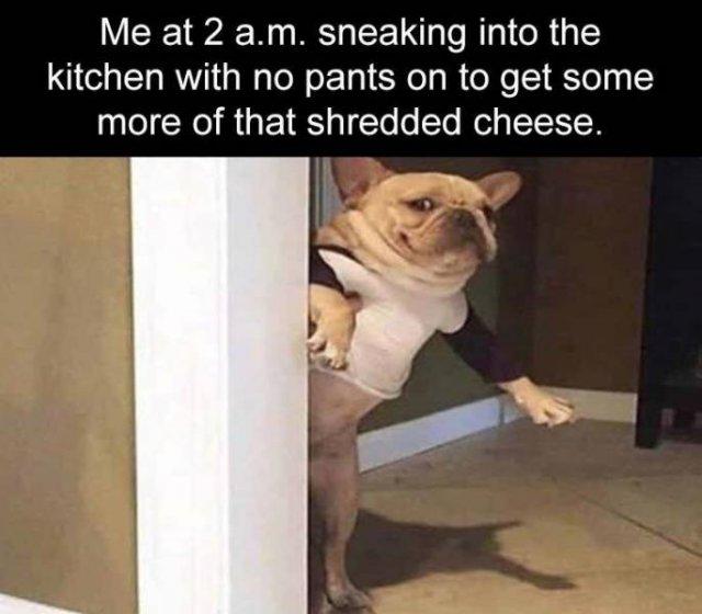 Random Funny Memes, part 111