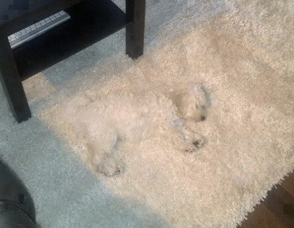 Accidental Camouflage, part 3