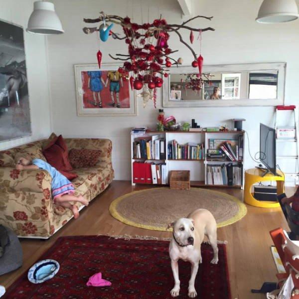 Christmas Trees And Pets