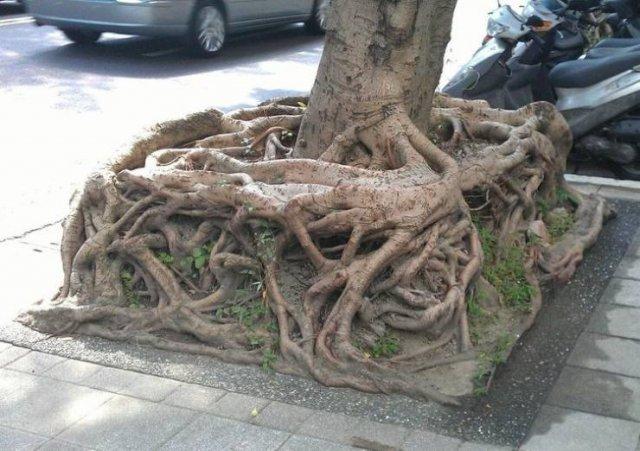 Amazing Nature, part 8