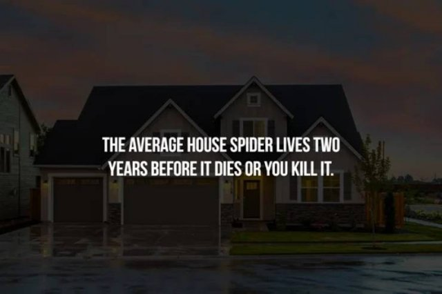 Interesting Facts, part 90