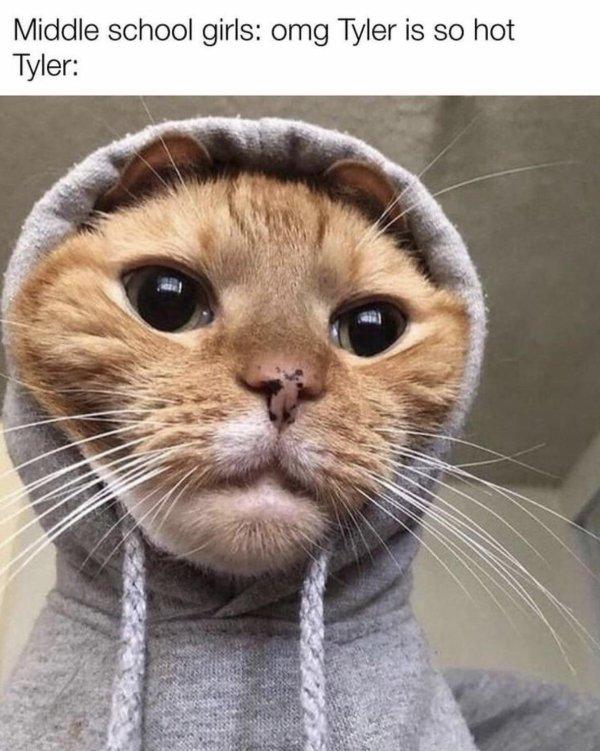 Hilarious Cats, part 4