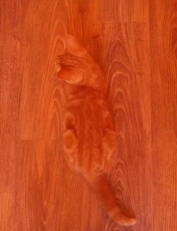 Accidental Camouflage, part 5