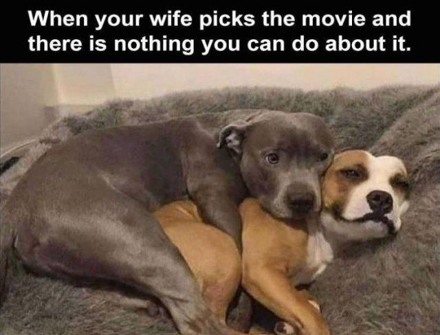 Random Funny Memes, part 135