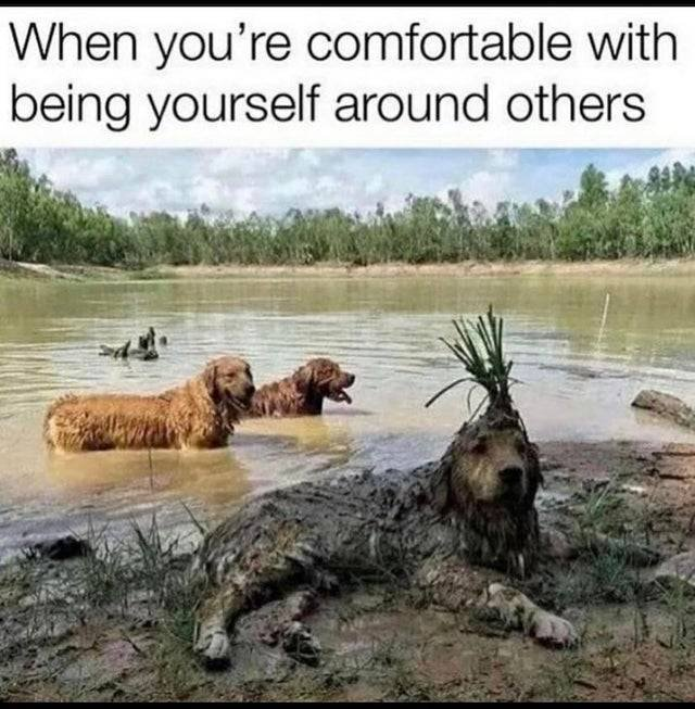 Wholesome Memes, part 23