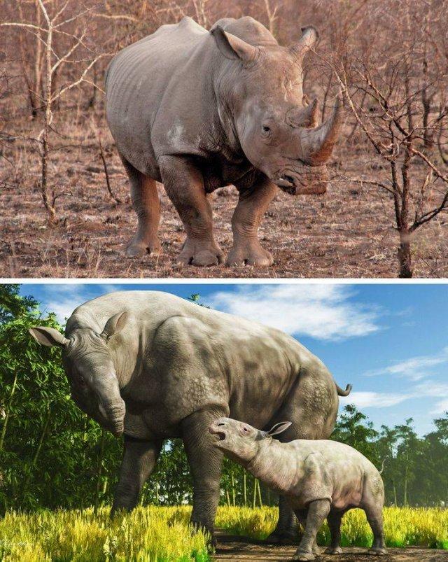 Animal's Prehistoric Ancestors