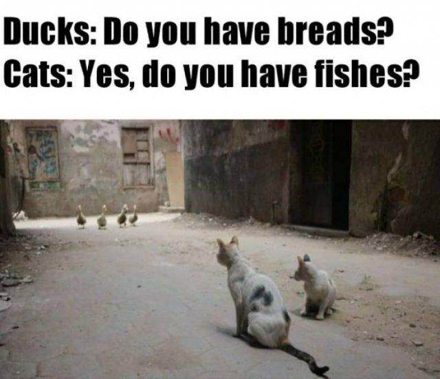 Internet Humor, part 6